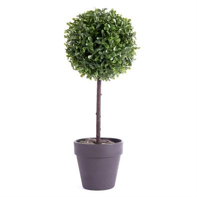 Buxusvý stromček v kvetináči