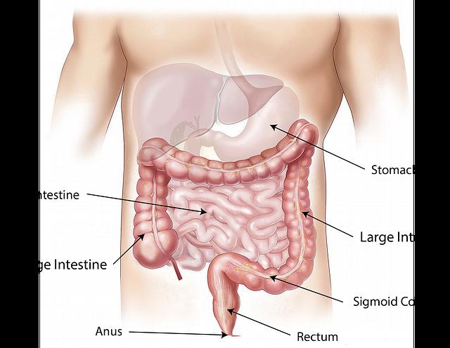 colon dophilus črevá