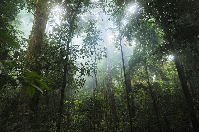 Muira Puama: Amazonské afrodiziakum