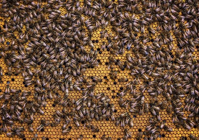 Propolis a propolisová tinktúra – aké sú účinky propolisu a aké je dávkovanie