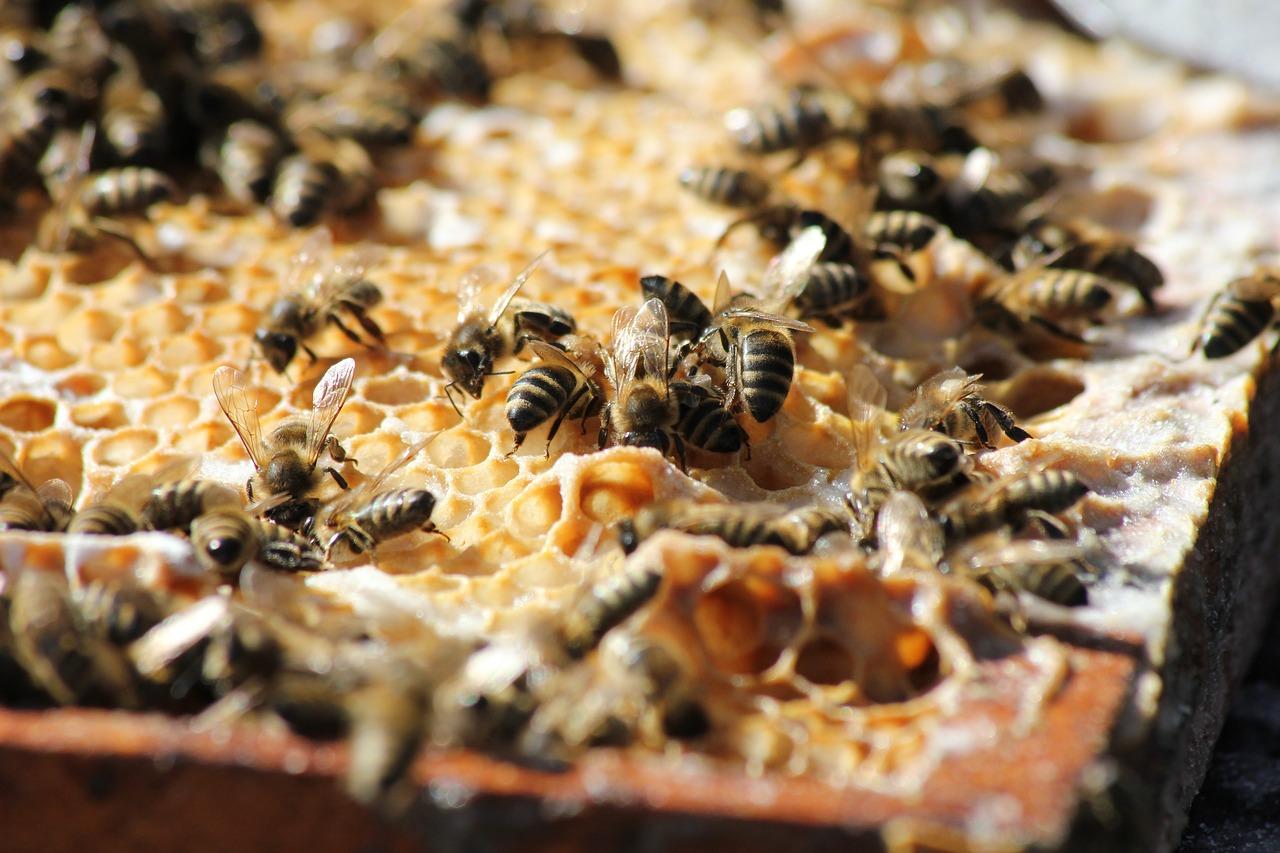 Včelí peľ – univerzálny zázrak prírody