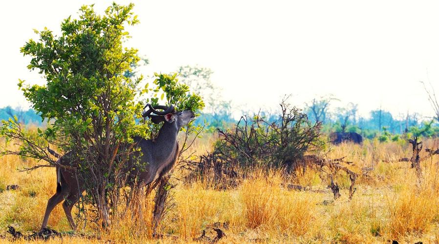 Botswana – krajina divočiny