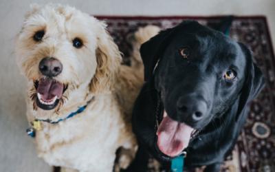 Kvalitné krmivo pre psov, ktoré si váš štvornohý miláčik zamiluje