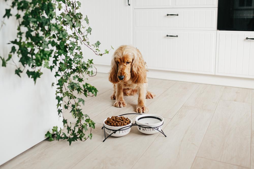 Na toto sa sústreďte pri výbere granúl pre psa